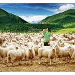 Srint - Sheep CL: Atlantic grupa, A: Imago reklamna agencija, CD: Vanja Blumenšajn, AD: Saša Perić, Ivan Lugomer, FOTO: Saša Perić, photostock
